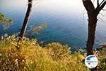 Pine trees Angistri (Agkistri) | Greece | Greece  Photo 8 - Photo GreeceGuide.co.uk