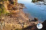 Klein Sandy beach between the dennebomen near Skala | Angistri (Agkistri) - Saronic Gulf Islands - Greece | Photo 2 - Photo GreeceGuide.co.uk