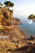 Klein Sandy beach between the dennebomen near Skala | Angistri (Agkistri) - Saronic Gulf Islands - Greece | Photo 4 - Photo GreeceGuide.co.uk