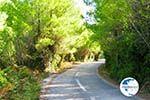 Chrisi Milia | Alonissos Sporades | Greece  Photo 3 - Photo GreeceGuide.co.uk