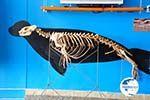 MOM, Monachus-Monachus seals Alonissos   Sporades Photo 7 - Photo GreeceGuide.co.uk