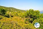 Steni Vala | Alonissos Sporades | Greece  Photo 5 - Photo GreeceGuide.co.uk