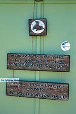 MOM, Monachus-Monachus seals Alonissos | Sporades Photo 9 - Photo GreeceGuide.co.uk