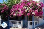 Nimborio Halki - Island of Halki Dodecanese - Photo 129 - Photo GreeceGuide.co.uk