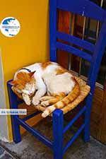 Chania city Crete - Chania Prefecture - Photo 34 - Photo GreeceGuide.co.uk