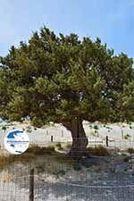 Elafonisi Crete - Chania Prefecture - Photo 50 - Photo GreeceGuide.co.uk
