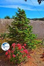 Gouverneto monastery Crete - Chania Prefecture - Photo 15 - Photo GreeceGuide.co.uk