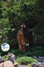 Imbros gorge Crete - Chania Prefecture - Photo 1 - Photo GreeceGuide.co.uk