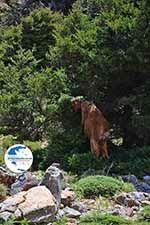 Imbros gorge Crete - Chania Prefecture - Photo 2 - Photo GreeceGuide.co.uk