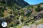 Imbros gorge Crete - Chania Prefecture - Photo 12 - Photo GreeceGuide.co.uk