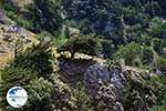 Imbros gorge Crete - Chania Prefecture - Photo 18 - Photo GreeceGuide.co.uk