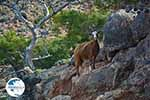 Koudoumas Crete - Heraklion Prefecture - Photo 34 - Photo GreeceGuide.co.uk