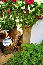 Spili | Rethymnon Crete | Photo 8 - Photo GreeceGuide.co.uk