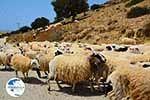 Triopetra Crete - Rethymno Prefecture - Photo 3 - Photo GreeceGuide.co.uk