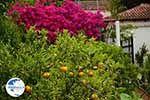 Varipetro Crete - Chania Prefecture - Photo 24 - Photo GreeceGuide.co.uk