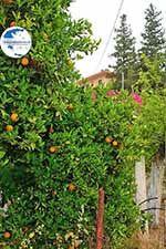 Varipetro Crete - Chania Prefecture - Photo 25 - Photo GreeceGuide.co.uk
