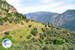 Delphi (Delfi) | Fokida | Central Greece  Photo 27 - Photo GreeceGuide.co.uk