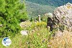 Delphi (Delfi) | Fokida | Central Greece  Photo 83 - Photo GreeceGuide.co.uk