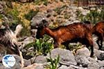 Samaria gorge | Crete | Greece Photo 3 - Photo GreeceGuide.co.uk