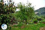 Traditional Village Topolia | Chania Crete | Chania Prefecture 14 - Photo GreeceGuide.co.uk