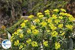 Traditional Village Topolia | Chania Crete | Chania Prefecture 21 - Photo GreeceGuide.co.uk