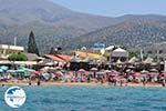 Malia Crete | Greece | Greece  - Photo 003 - Photo GreeceGuide.co.uk