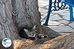 Lendas (Lentas) | South Crete | Greece  Photo 38 - Photo GreeceGuide.co.uk