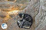 Lendas (Lentas) | South Crete | Greece  Photo 40 - Photo GreeceGuide.co.uk