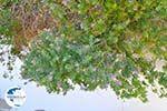 Lendas (Lentas) | South Crete | Greece  Photo 45 - Photo GreeceGuide.co.uk
