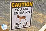 Donkey sanctuary Aghia Marina near Petrokefali | South Crete | Greece  Photo 1 - Photo GreeceGuide.co.uk
