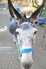 Donkey sanctuary Aghia Marina near Petrokefali | South Crete | Greece  Photo 4 - Photo GreeceGuide.co.uk