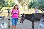 Donkey sanctuary Aghia Marina near Petrokefali | South Crete | Greece  Photo 15 - Photo GreeceGuide.co.uk