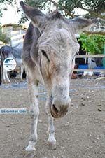 Donkey sanctuary Aghia Marina near Petrokefali | South Crete | Greece  Photo 17 - Photo GreeceGuide.co.uk