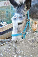 Donkey sanctuary Aghia Marina near Petrokefali   South Crete   Greece  Photo 19 - Photo GreeceGuide.co.uk