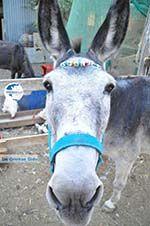 Donkey sanctuary Aghia Marina near Petrokefali | South Crete | Greece  Photo 21 - Photo GreeceGuide.co.uk