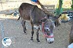 Donkey sanctuary Aghia Marina near Petrokefali | South Crete | Greece  Photo 24 - Photo GreeceGuide.co.uk