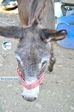 Donkey sanctuary Aghia Marina near Petrokefali | South Crete | Greece  Photo 25 - Photo GreeceGuide.co.uk