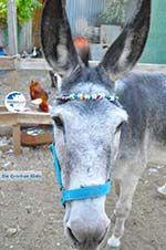 Donkey sanctuary Aghia Marina near Petrokefali | South Crete | Greece  Photo 26 - Photo GreeceGuide.co.uk