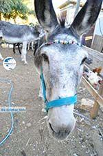 Donkey sanctuary Aghia Marina near Petrokefali | South Crete | Greece  Photo 31 - Photo GreeceGuide.co.uk