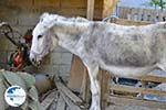Donkey sanctuary Aghia Marina near Petrokefali | South Crete | Greece  Photo 32 - Photo GreeceGuide.co.uk
