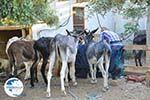 Donkey sanctuary Aghia Marina near Petrokefali   South Crete   Greece  Photo 33 - Photo GreeceGuide.co.uk