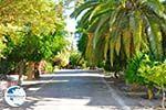 Panagia Kaliviani near Mires| South Crete | Greece  Photo 24 - Photo GreeceGuide.co.uk