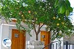 Kamilari | South Crete | Greece  Photo 40 - Photo GreeceGuide.co.uk
