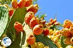 Cactusvijgen near Taverna the Belgen in Vori   South Crete   Greece  Photo 2 - Photo GreeceGuide.co.uk