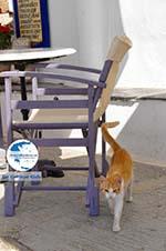 Avlemonas Kythira | Ionian Islands | Greece | Greece  6 - Photo GreeceGuide.co.uk