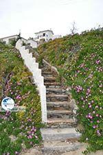 Batsi | Island of Andros | Greece  | Photo 6 - Photo GreeceGuide.co.uk