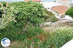 Batsi   Island of Andros   Greece    Photo 15 - Photo GreeceGuide.co.uk