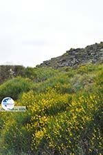 To the monastery of Panachrantou   Island of Andros   Greece  006 - Photo GreeceGuide.co.uk