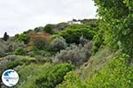 To the monastery of Panachrantou | Island of Andros | Greece  010 - Photo GreeceGuide.co.uk