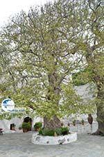 Panachrantou monastery | Island of Andros | Greece  | Photo 18 - Photo GreeceGuide.co.uk